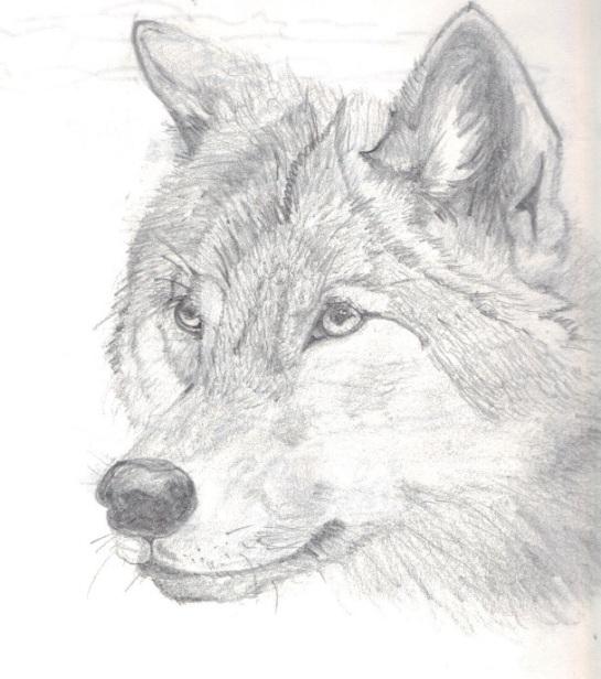 Blake-wolf
