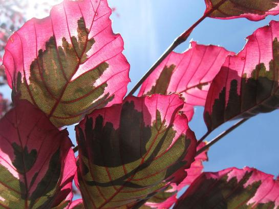 macro-leaves-sean-seal (1)