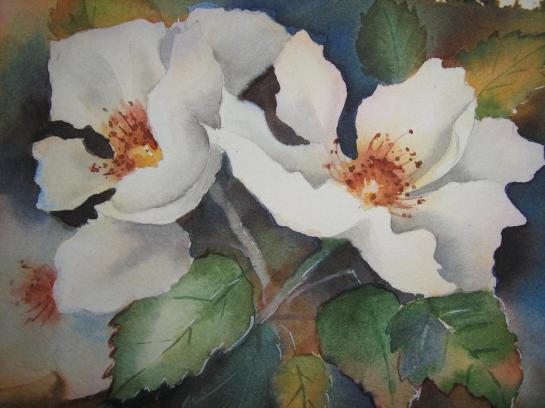 hedge-roses-heidi-brummer